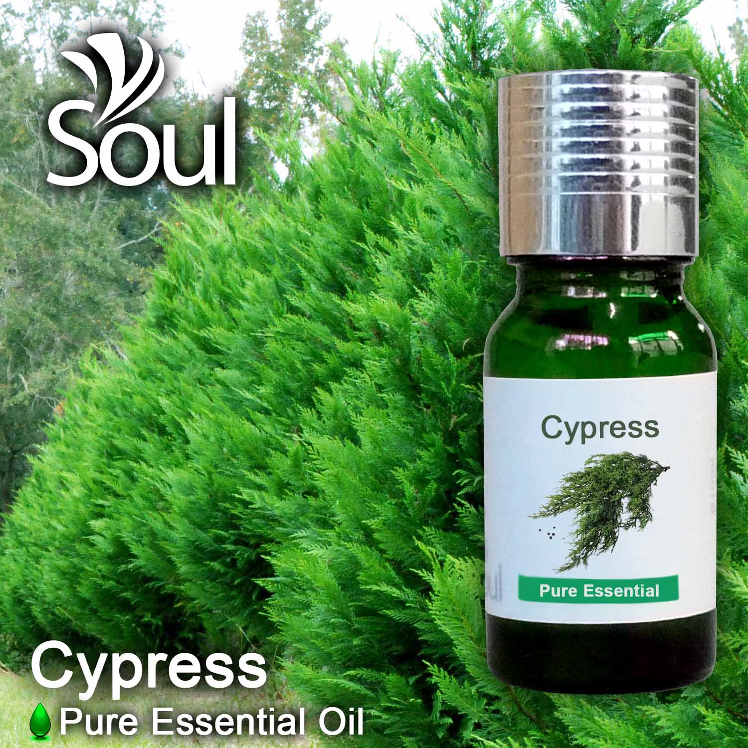 Minyak Pati Cypress - 10ml