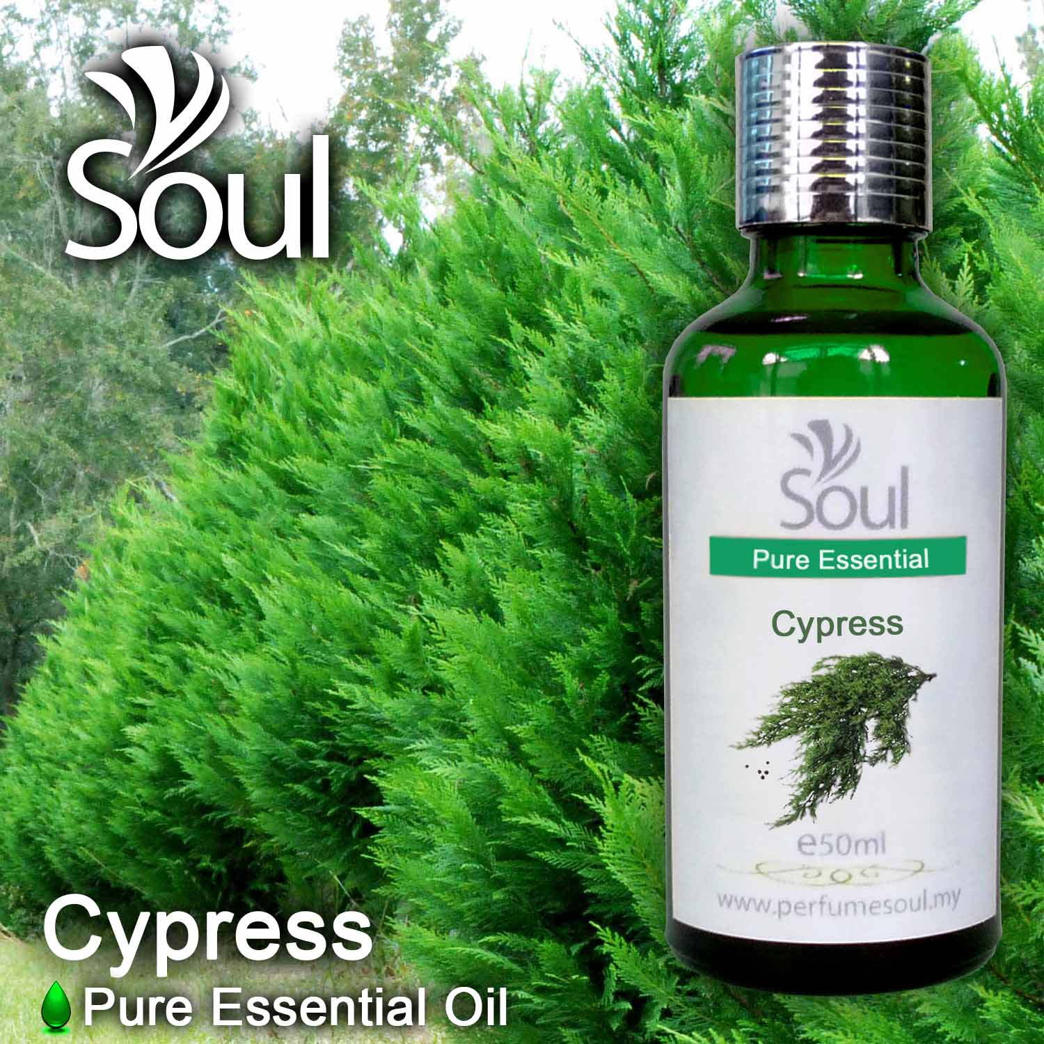 Minyak Pati Cypress - 50ml